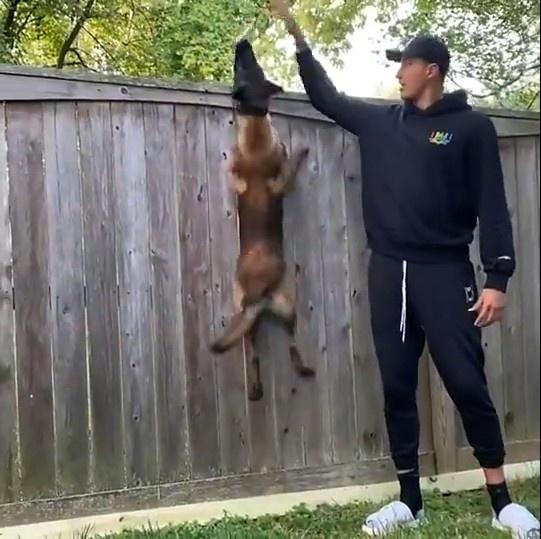 Kuzma曬訓狗影片:終於懂他們放置「小心惡犬」標志的原因了!